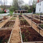 Lighthouse Community School Garden Growing Confident Students