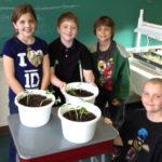 Veggie U Blooms in the Classroom