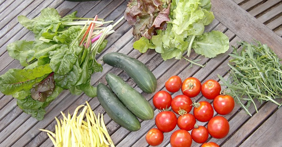 Cincinnati Organization Teaches about Gardening and the Environment