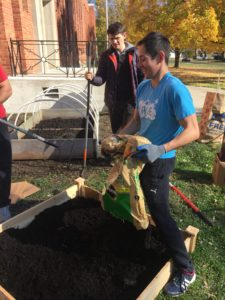 OSU student pouring bag of dirt into garden