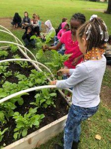 children standing over raised bed garden