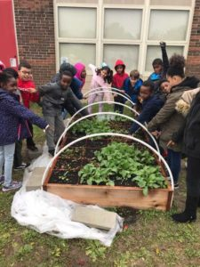 Group of kids standing around raised bed with plants growing